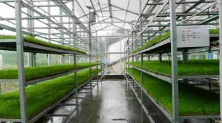 用广州仓库货架培育水稻秧苗需要注意的问题